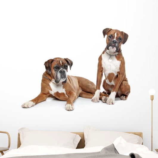 fawn Boxer dogs Wall Decal