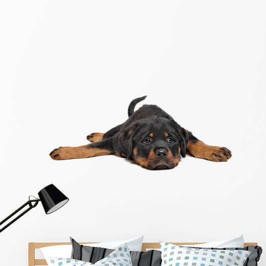 rottweiler puppy Wall Decal