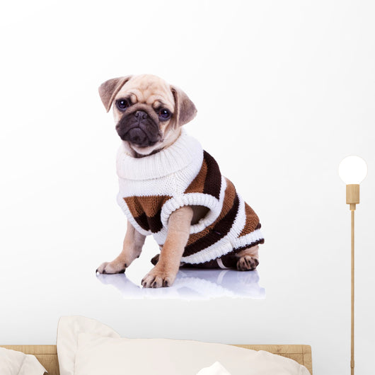 cute mops puppy dog wearing clothes Wall Decal