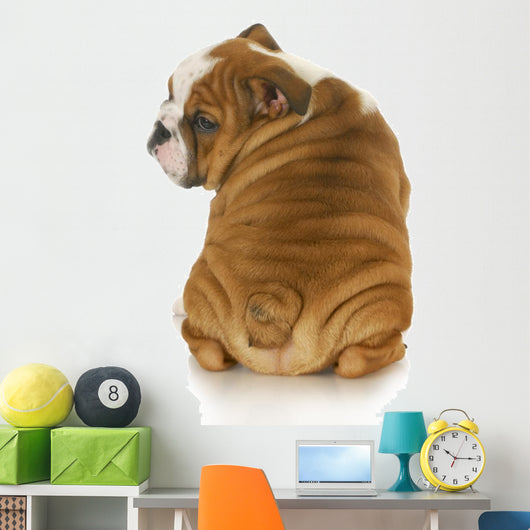 cute puppy Wall Decal