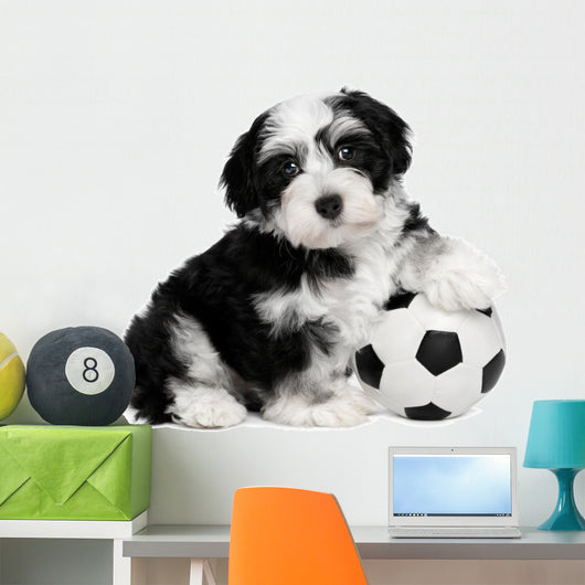 Cute Sitting Havanese Puppy Dog Wall Decal