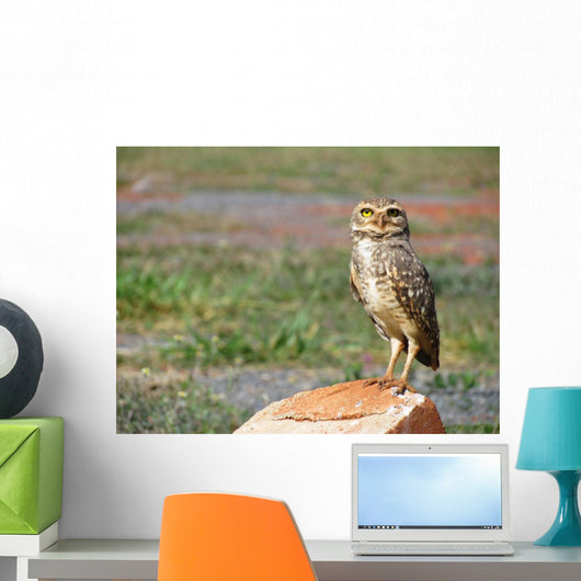 Lonely Owl with Fixed Wall Mural