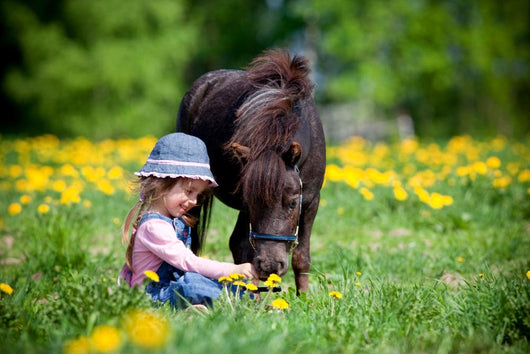 Child Feeding Small Horse