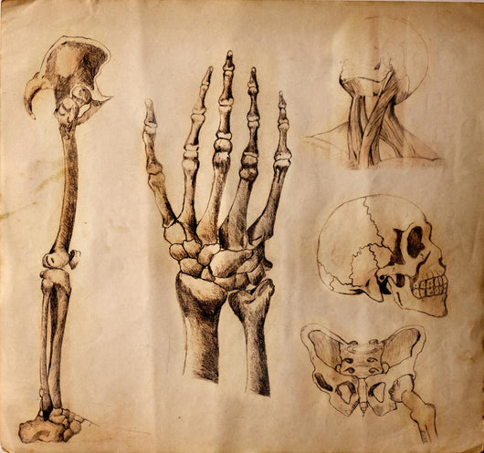 Old drawings of anatomy (body parts) Wall Mural