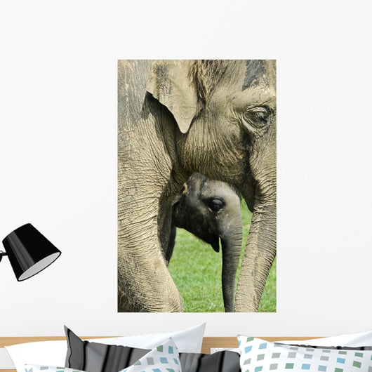 Elephant Calf Wall Mural