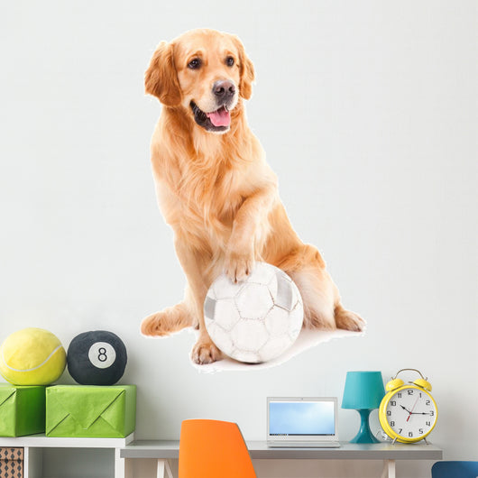 golden retriever dog playing with ball on isolated  white Wall Decal
