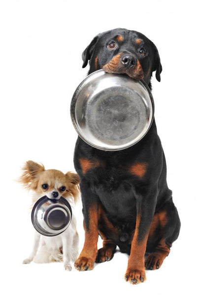 Rottweiler Chihuahua and Food Wall Decal
