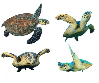 Hawksbill Sea Turtles White Wall Decal