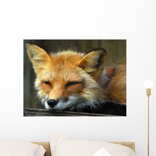 Resting Red Fox Wall Decal