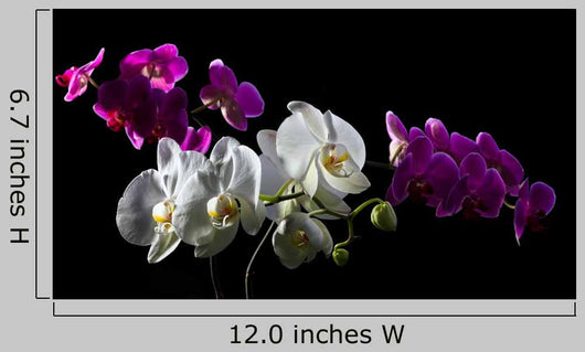 Purple and White Orchid Wall Decal