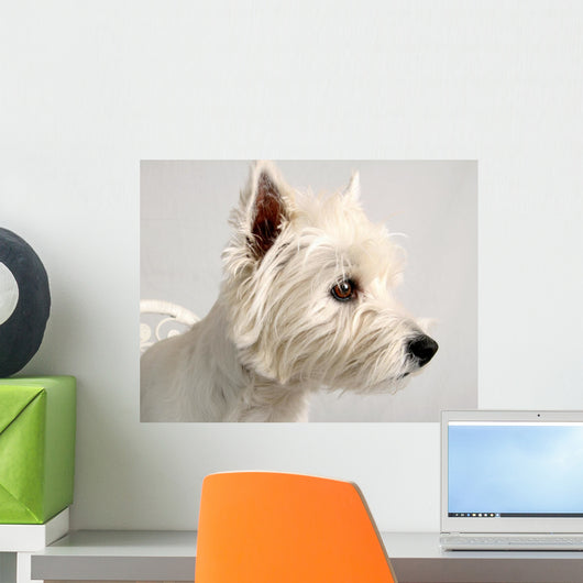 Portrait of a Westie Wall Mural