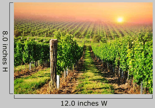 Green Vineyard South Moravia Wall Decal