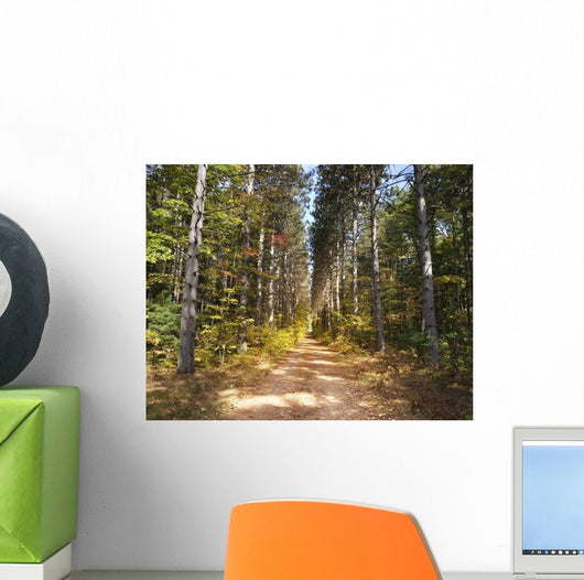 Path through Pine Trees Wall Decal