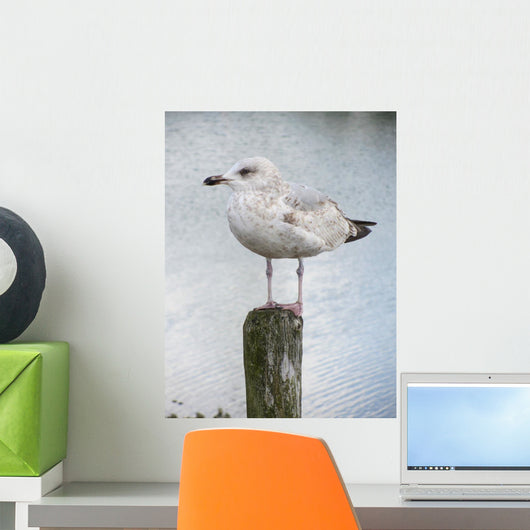 Mouette Wall Decal
