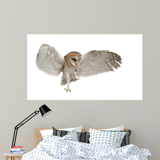 Barn Owl Tyto Alba 4 Months Old Wall Decal