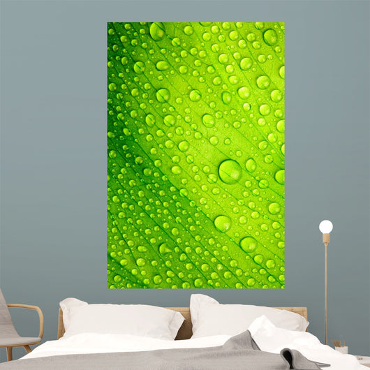 Green Leaf with Drops Wall Decal