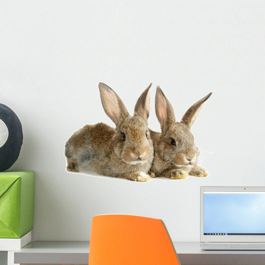 Two Rabbits Bunnies Isolated on White Wall Decal