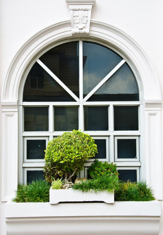 White Window with Bush
