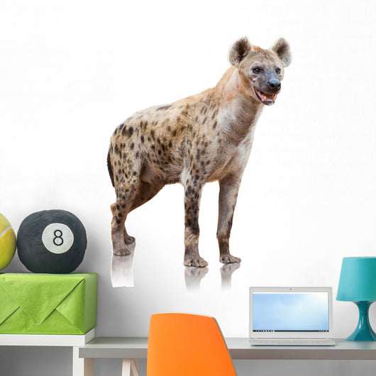 Portrait Of A Hyena Wall Decal