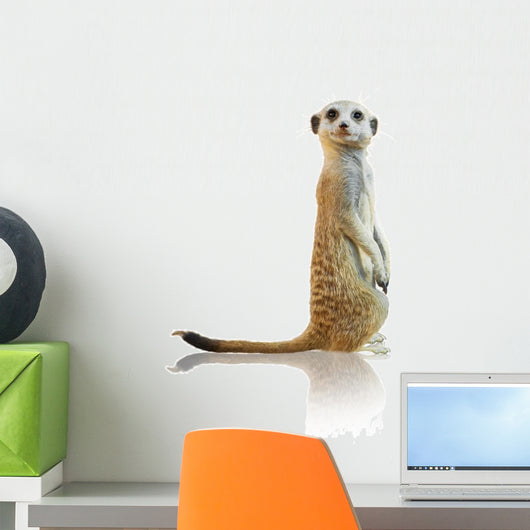 Portrait of A Meerkat Wall Decal