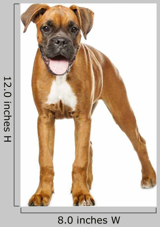 German Boxer Puppy 5