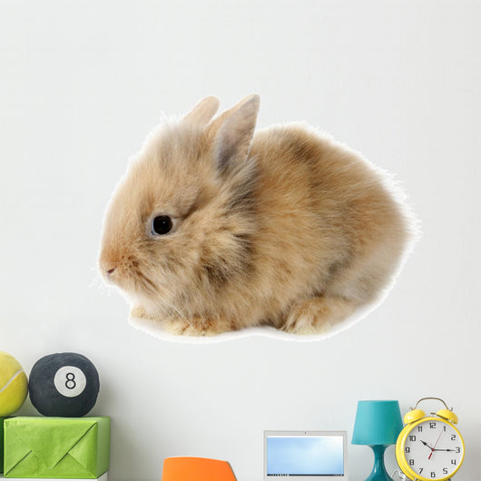 Rabbit Bunny Baby Isolated on White Background Wall Decal