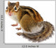 Chipmunk White