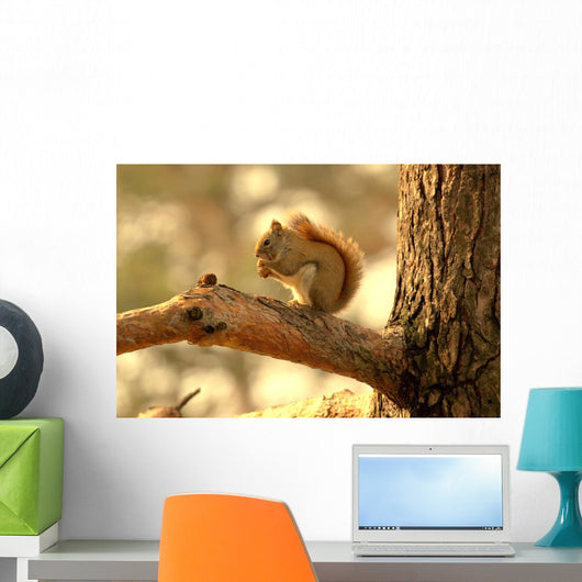 Squirrel Wall Mural