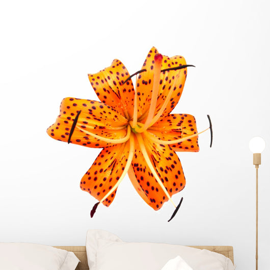Leopard liy. Wall Decal