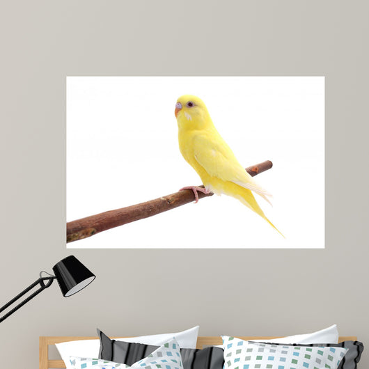 Bird Wall Decal