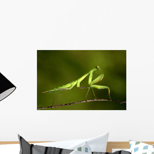 praying Mantis 03 Wall Mural