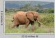 Elefant Elephant African Savannah