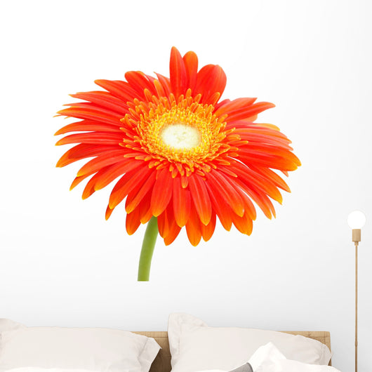 Orange Flower Wall Mural