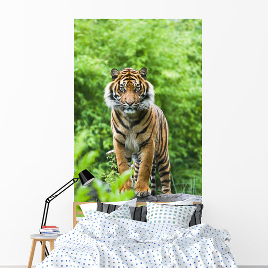 Bengal Tiger with Bamboo