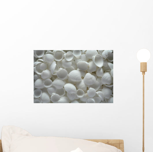 White Sea Shells as