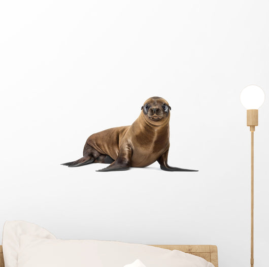 California Sea Lion Wall Decal