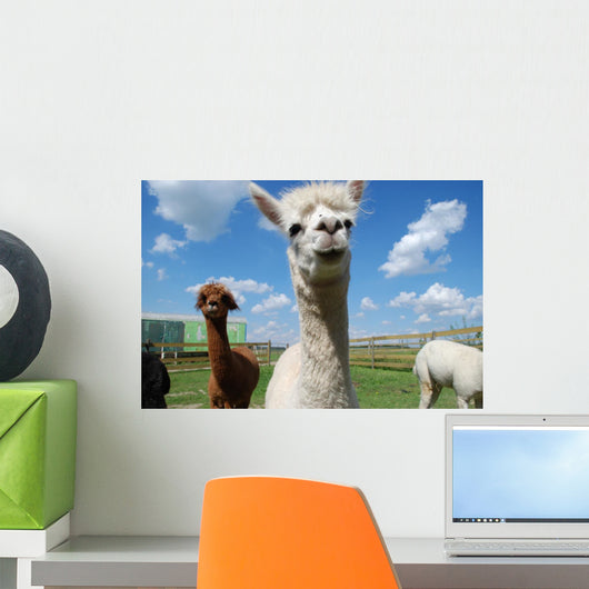 Alpacas and Blue Sky Wall Mural