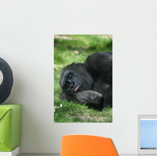 Sleeping Gorilla Wall Mural