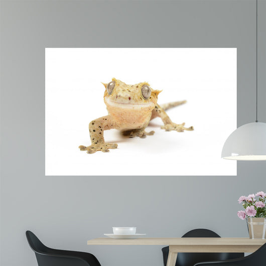 Crested Gecko Wall Mural