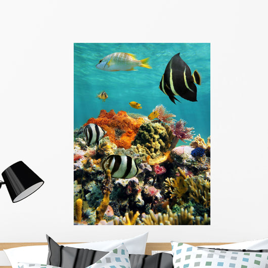 Coral Reef and Tropical