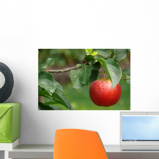 Red apple Wall Mural