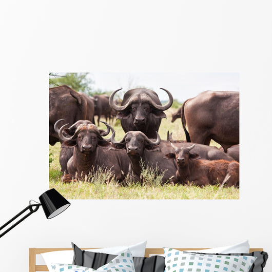 Buffalo Herd Resting Grass Wall Mural