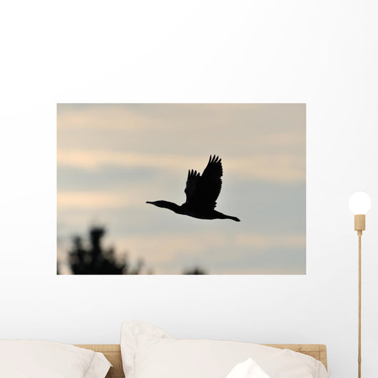 Cormorant in Flight Wall Mural