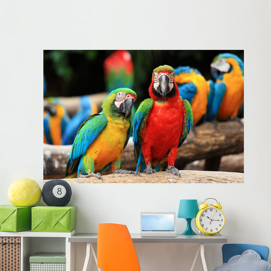 Couple Scarlet Macaw and