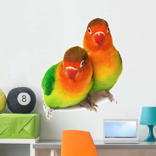 Pair of lovebirds agapornis-fischeri isolated on white. Wall Decal
