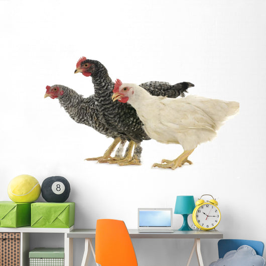 Chicken Friends Wall Decal