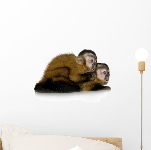 Two Baby Capuchins Sapajou Wall Decal
