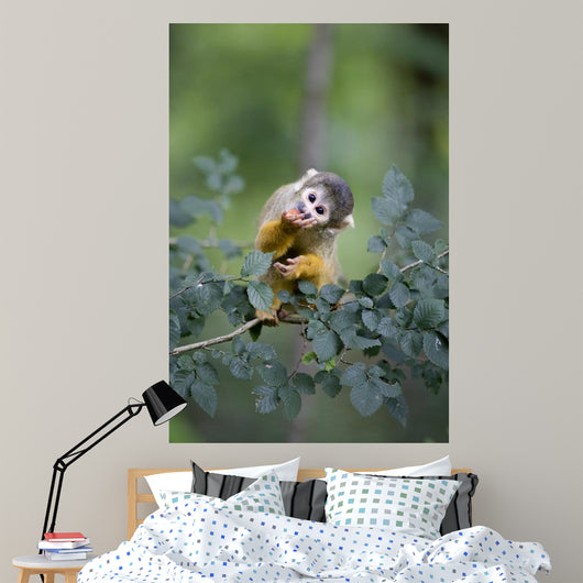 Common Squirrel Monkey Wall Mural