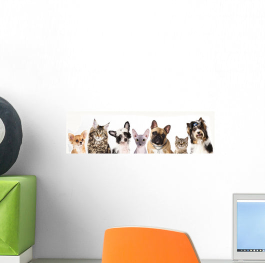 Cat and dog, medium group of animals Wall Decal
