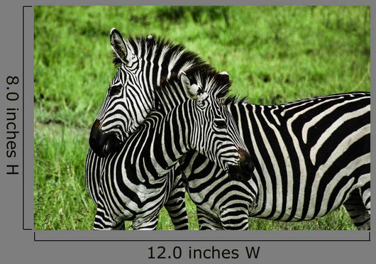Zebras over Green Zambia